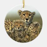 Maman de guépard et ornement de CUB