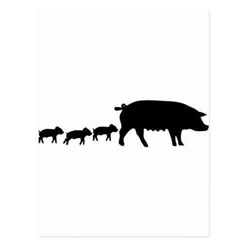 maman de porc avec icône de trois la jeune porcs carte postale