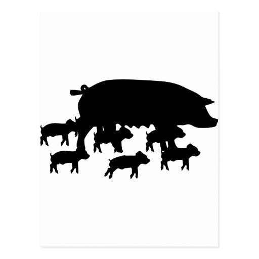 maman de porc avec la jeune icône de porcs cartes postales