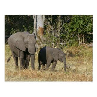 Maman et carte postale heureuse de veau d'éléphant