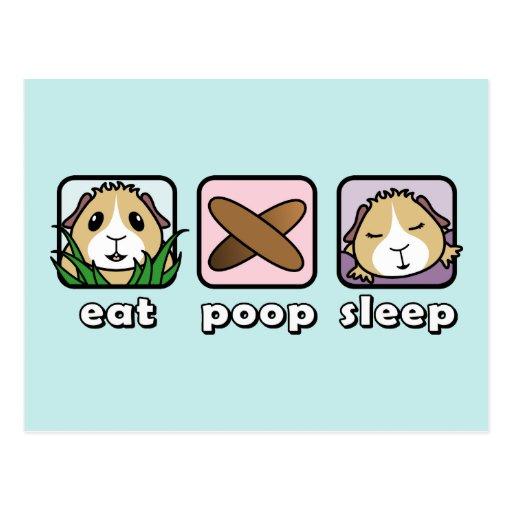 Mangez la carte postale de cobaye de sommeil de du