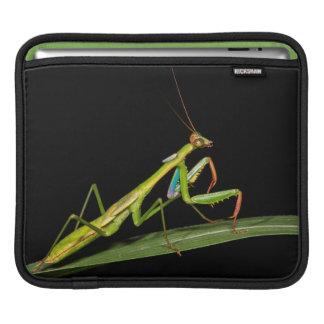 Mante attaquante, Odzala, parc national de Kokoua Housses iPad