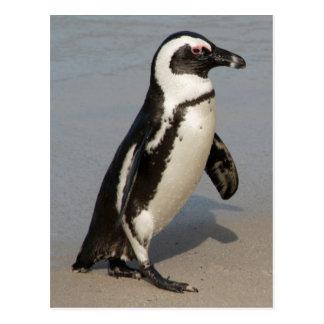 Marche africaine de pingouin carte postale
