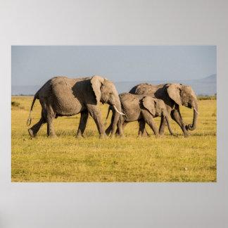 Marche de famille d'éléphant poster