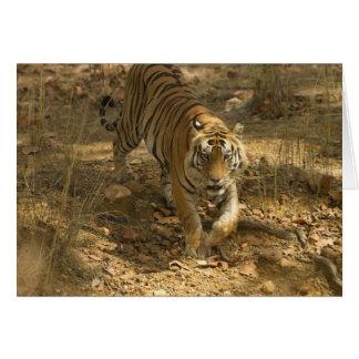 Marche de tigre de Bengale Cartes