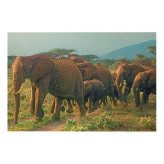 Marche de troupeau d'éléphant impression sur bois
