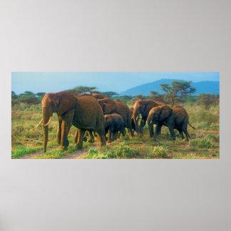Marche de troupeau d'éléphant poster