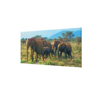 Marche de troupeau d'éléphant toile