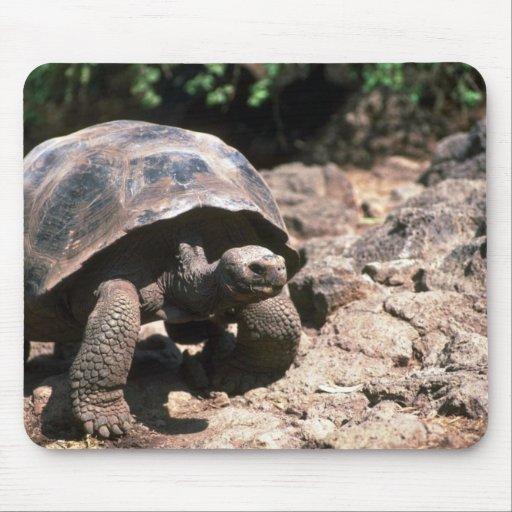 Marche en forme de dôme géante de tortue tapis de souris