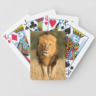Marche masculine de lion jeu de cartes