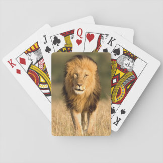 Marche masculine de lion jeux de cartes