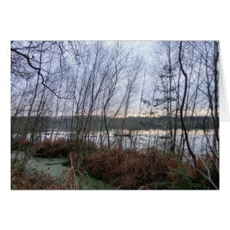 Marécages et mousse de Blakemere dans la forêt de  Cartes De Vœux