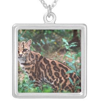 Margay, wiedi de Leopardus, indigène au Mexique Pendentif Carré