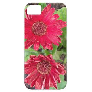 Marguerites de Gerbera Coques iPhone 5