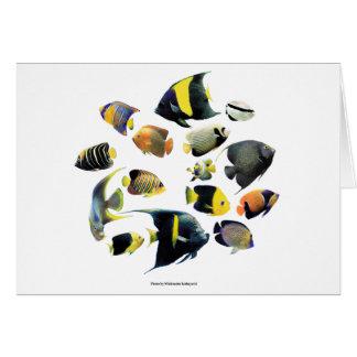 Marine angelfishの優良製品 カード