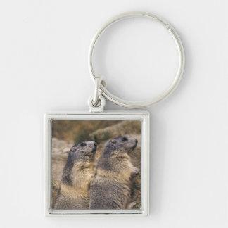 Marmot alpin, marmota de Marmota, adultes, Saas Porte-clé Carré Argenté