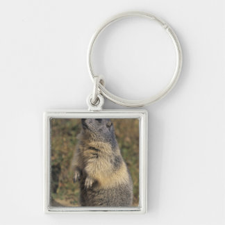 Marmot alpin, marmota de Marmota, position adulte Porte-clé Carré Argenté