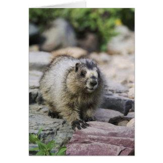 Marmot blanchi, caligata de Marmota, jeune avec Carte De Vœux
