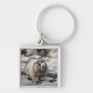 Marmot blanchi, caligata de Marmota, jeune avec Porte-clé Carré Argenté