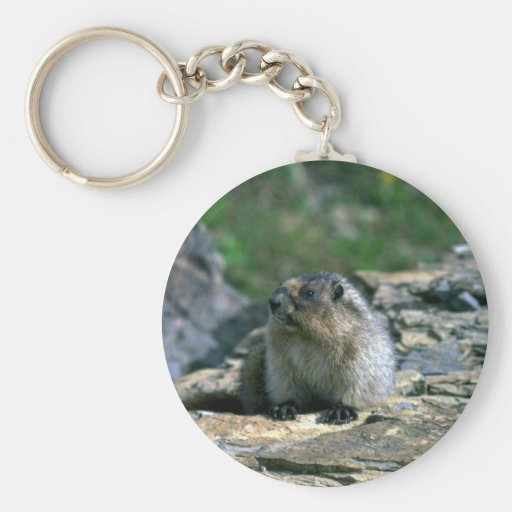 Marmot blanchi porte-clés
