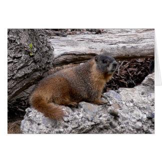 Marmot Carte De Vœux
