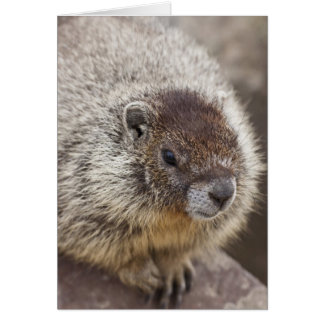 Marmot chez Palouse tombe parc d'état Carte De Vœux