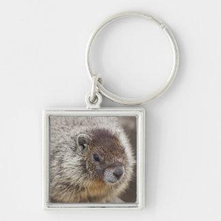 Marmot chez Palouse tombe parc d'état Porte-clé Carré Argenté