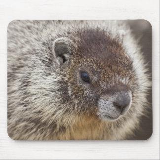 Marmot chez Palouse tombe parc d'état Tapis De Souris