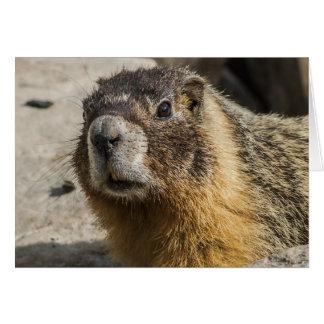Marmot gonflé par jaune carte de vœux