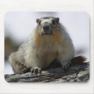 Marmot gonflé par jaune tapis de souris
