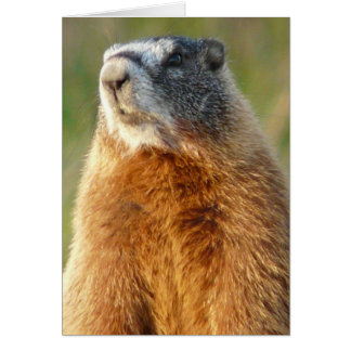 Marmot Jaune-gonflé Carte De Vœux