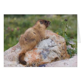 Marmot Jaune-gonflé, flaviventris de Marmota, Carte De Vœux