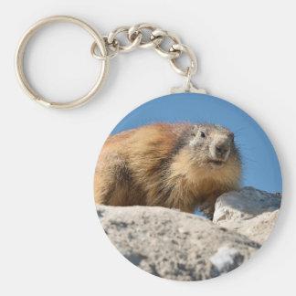 Marmotte alpine sur la roche porte-clés