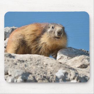Marmotte alpine sur la roche tapis de souris