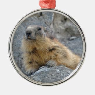 Marmotte alpine sur le roch ornement rond argenté