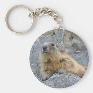 Marmotte alpine sur le roch porte-clés