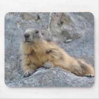 Marmotte alpine sur le roch tapis de souris