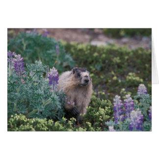 marmotte blanchie, caligata de Marmota, alimentant Carte De Vœux