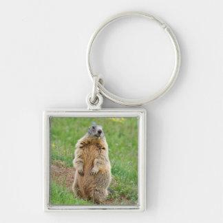 Marmotte de sentinelle porte-clé carré argenté