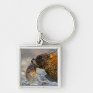 marmotte et bébé porte-clé carré argenté