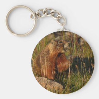 marmotte porte-clefs