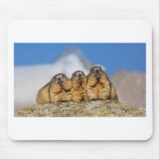 Marmottes alpines tapis de souris
