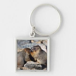 Marmottes de bébé porte-clé carré argenté