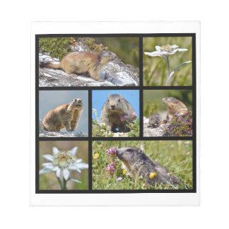 Marmottes et edelweiss alpins de mosaïque de photo blocs notes