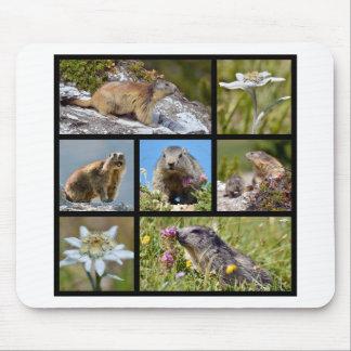 Marmottes et edelweiss alpins de mosaïque de photo tapis de souris