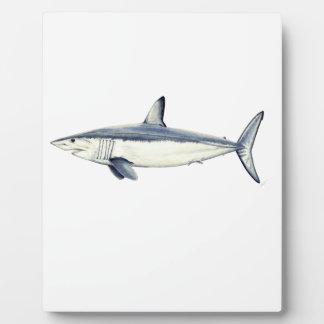 Marrajo - Isurus oxyrinchus- Requin Photos Sur Plaques