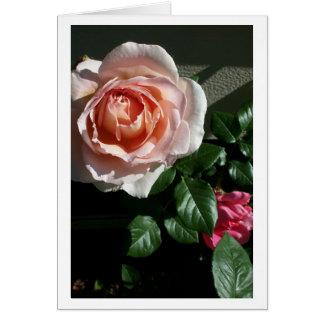 Masquez la carte rose #2