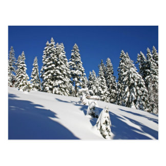 Matin de poudre, prés alpins… carte postale