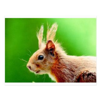 Mauvais écureuil de jour de cheveux carte postale