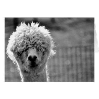 Mauvais jour de cheveux - carte d'alpaga